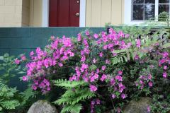 fern-grove-cottages-guerneville-ca