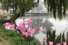 monterey-park-setting-with-lake-flowers