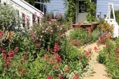 olallieberry-gardens